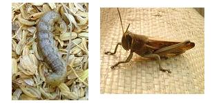 苺のハウス内の虫たち