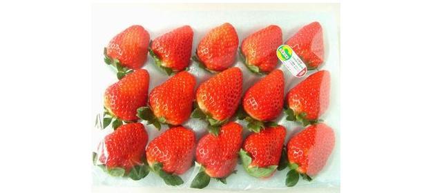 古賀農園 無農薬苺 さがほのか 特大サイズ15粒トレー入り