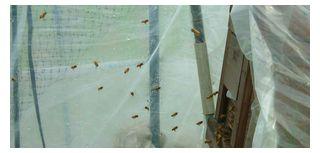興奮している蜜蜂