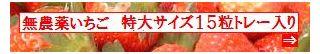 古賀農園 佐賀県産 無農薬栽培苺 特大サイズ15粒トレー入り